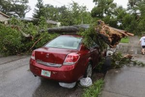 התרסקות של עץ על אוטו - תמונה להמחשה